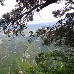 Las vistas desde el árbol donde hacemos R