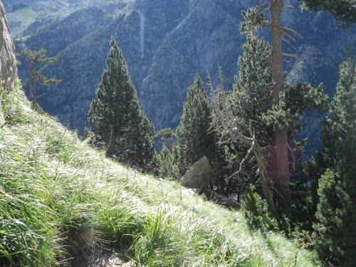 Foto de la pradera desde el pie de vía de la segunda parte