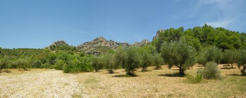 Campo de olivos junto al aparcamiento