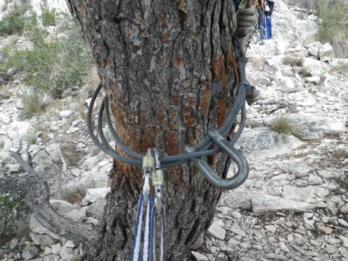 Instalación de rápel del árbol