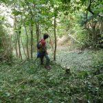 Trabajos forestales en la canal de Sant Jeroni