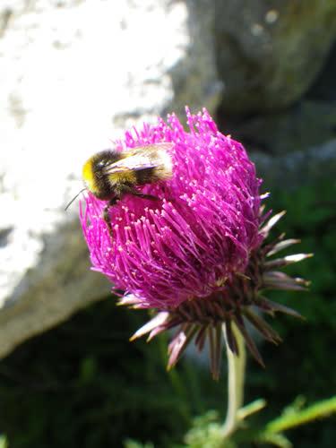 Flora y fauna de la zona