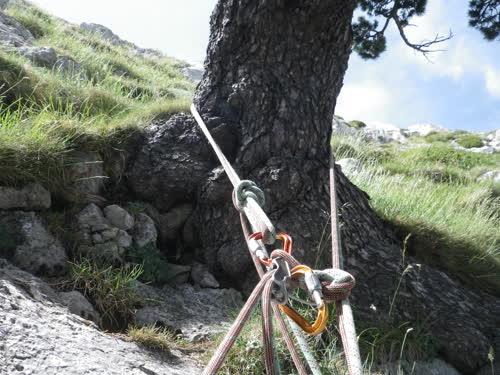 R en el pino