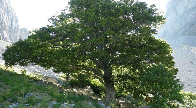 Espíritu del Bosque. Valle de Ansó