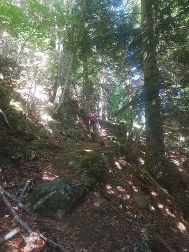 Camino agradable por el bosque